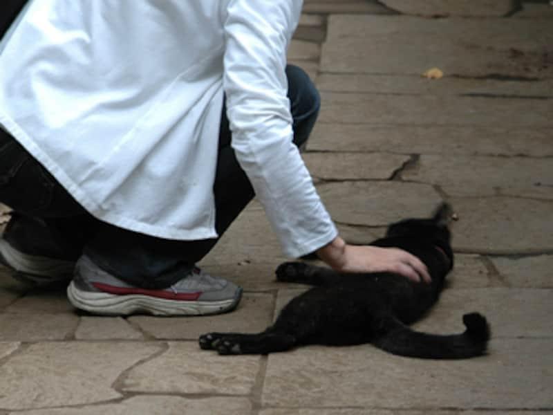 人も猫に救われる瞬間があるのです