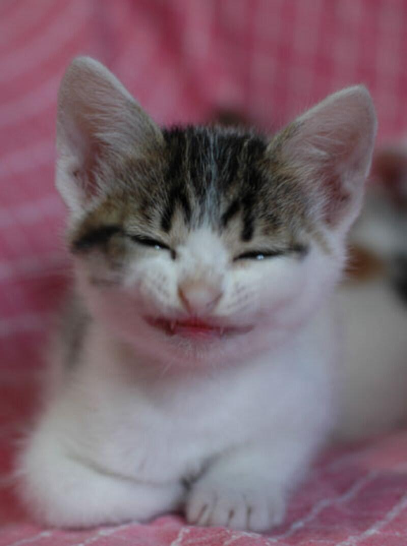 第1位:微笑んだつもりだけど、キバが怖いかも~