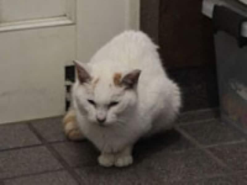 チロちゃんは具合が悪くなるにつれ、玄関の靴箱の下に潜り込むようになりました
