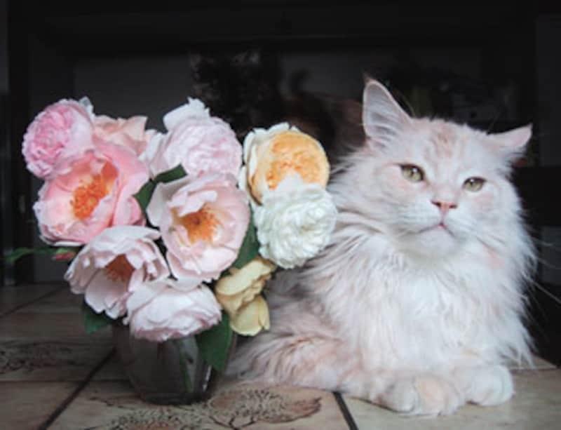 写真を撮ったら、すぐに花を片付けましょう