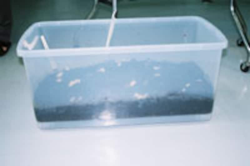 ミミズ 繁殖