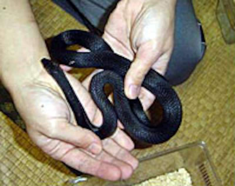 5.ヘビの体との接点を多くしながら、なだめます