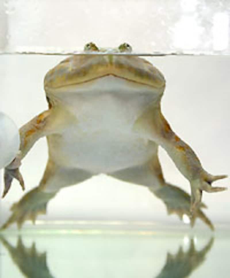 どんなアングルでも絵になるカエルです