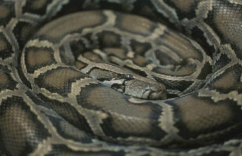 昆虫食性ヘビ編!虫を食べる爬虫類・蛇たちの飼育とは