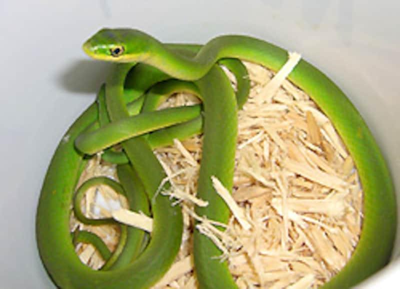 緑がキレイ...