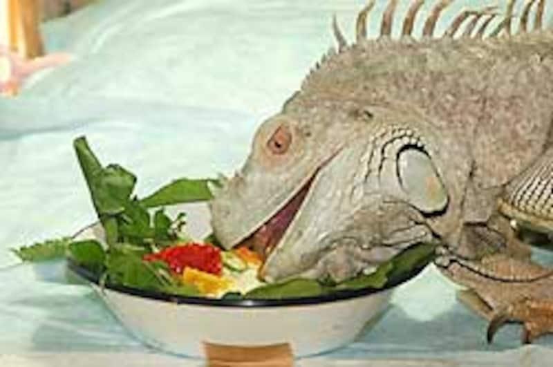 爬虫類って、なんでこんなにうまそうに野菜とか果物を食うんだろう...