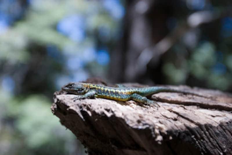 蛇や爬虫類の脱皮の理由