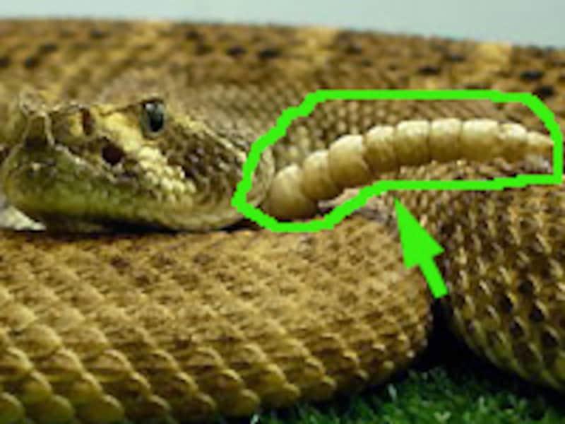 緑色のライン、邪魔...だよな