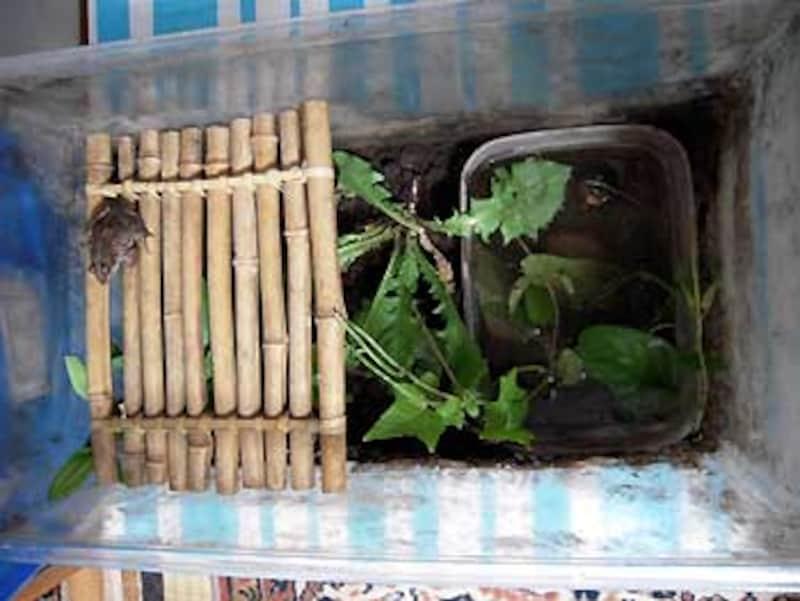 棚の上でくつろぐカエルが、実にイイ!