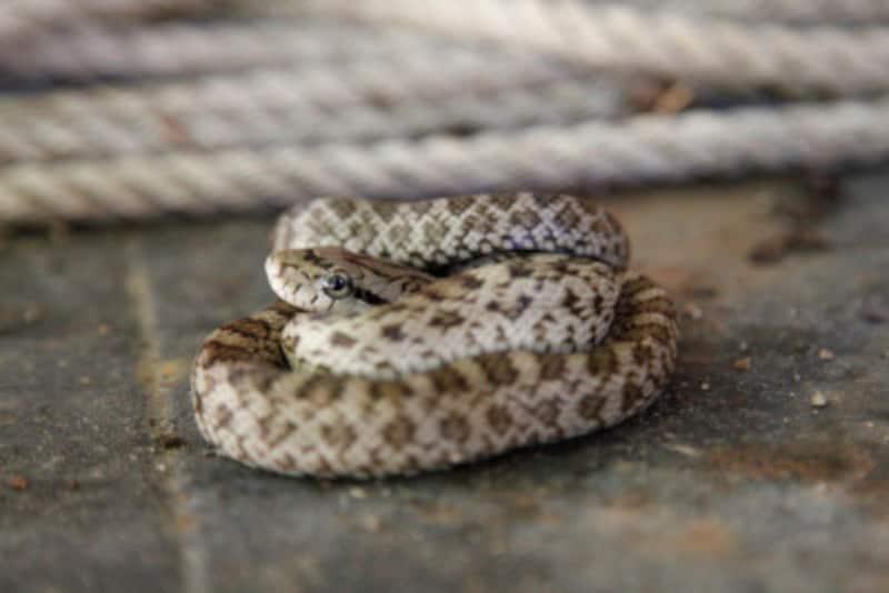 毒蛇は頭の形が三角って本当?