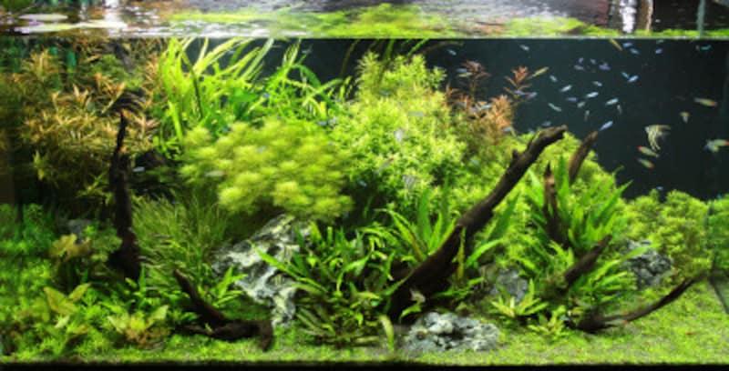 透明な熱帯魚とは