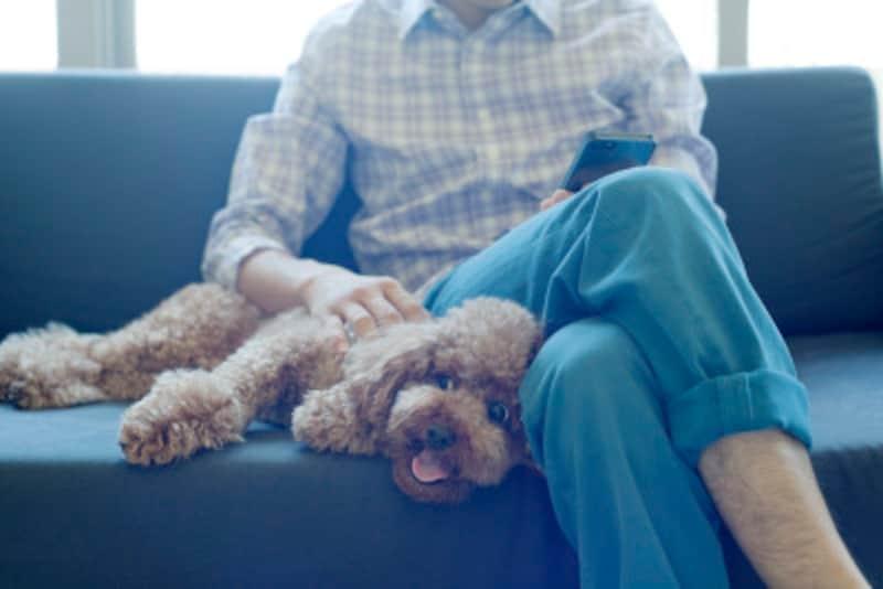 犬アレルギーでも飼えるペットをご紹介