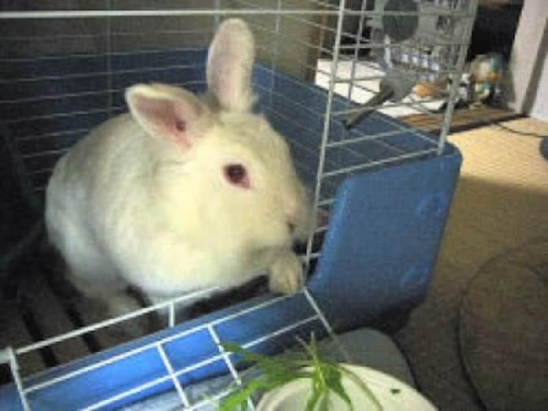 ウサギの誤食