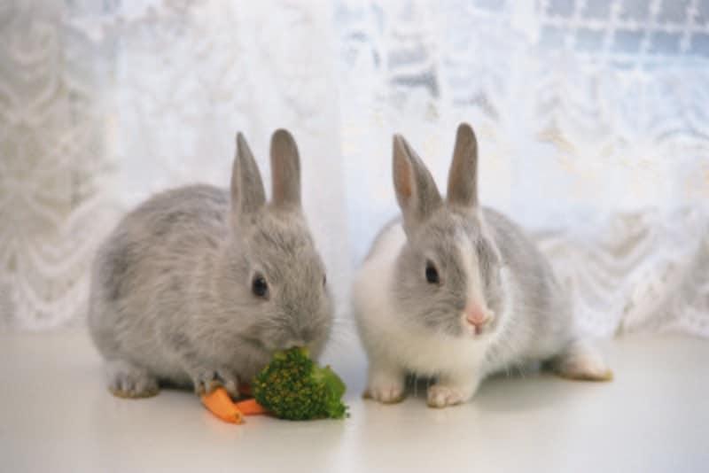 ウサギが紙や畳をかじる誤食の危険性