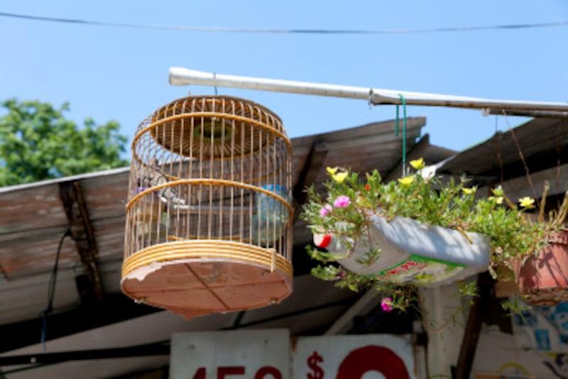 九官鳥の飼い方