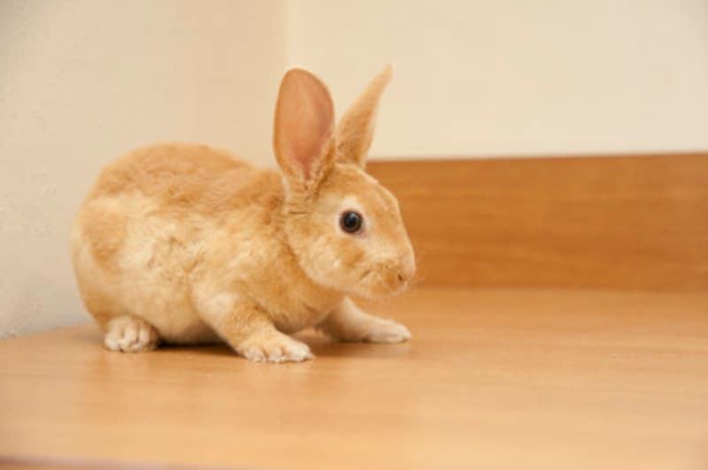 臆病な子の多いウサギは、上から急につかまれたりすると驚いてしまうことが多くあります。