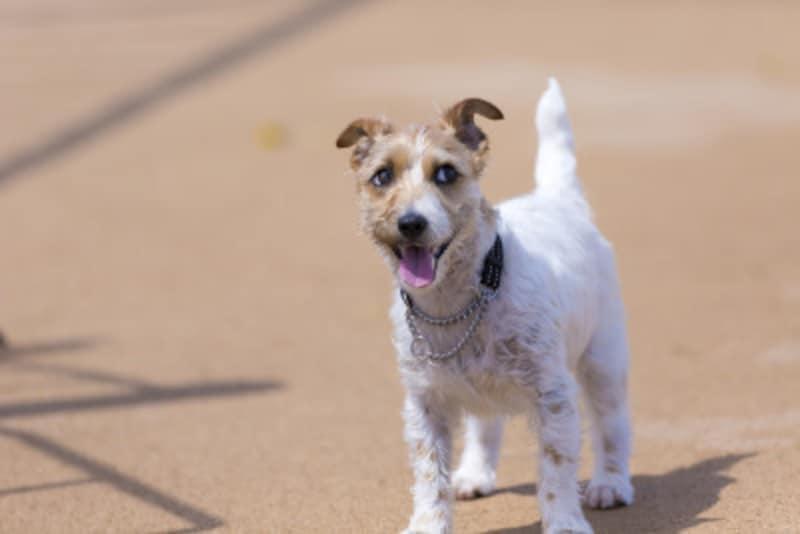犬やハムスターなどのペットに噛まれたときのために、正しい知識を持ちましょう。