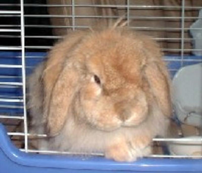 ウサギのもこたん♪