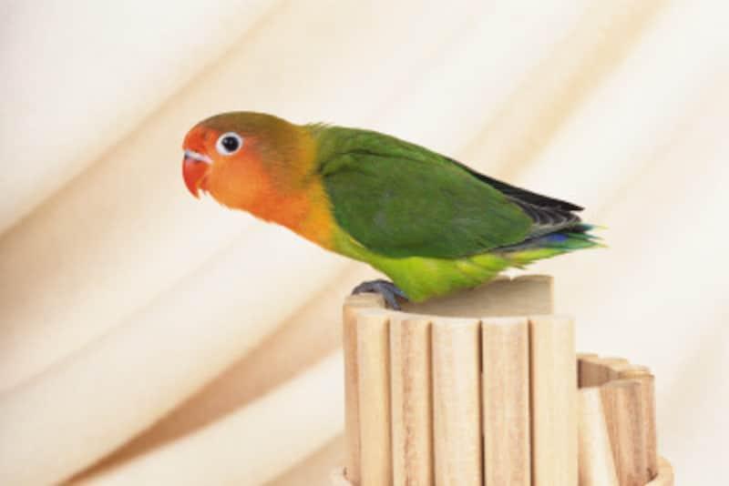 鳥の雌雄判別法とは