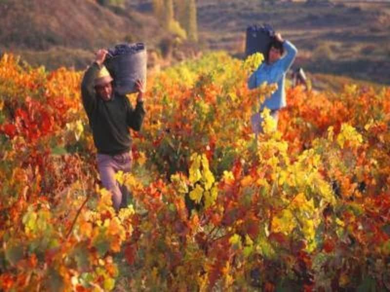 リオハ県アラバの赤ワインはスペインを代表する偉大なワイン。