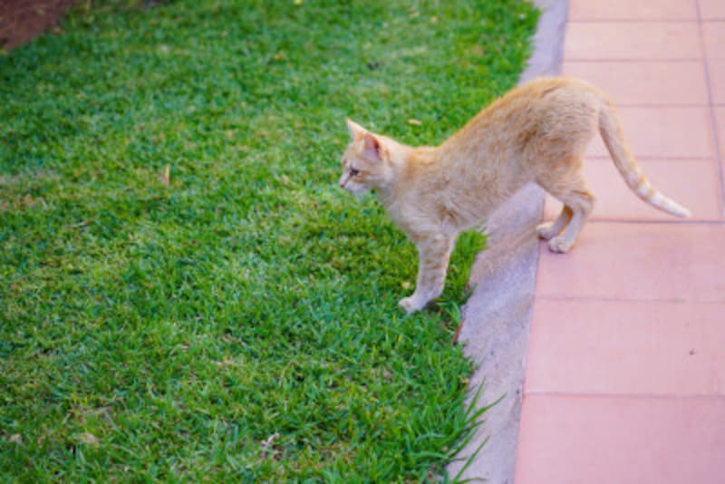 猫が花壇を掘る?どうする?!お庭のネコ対策
