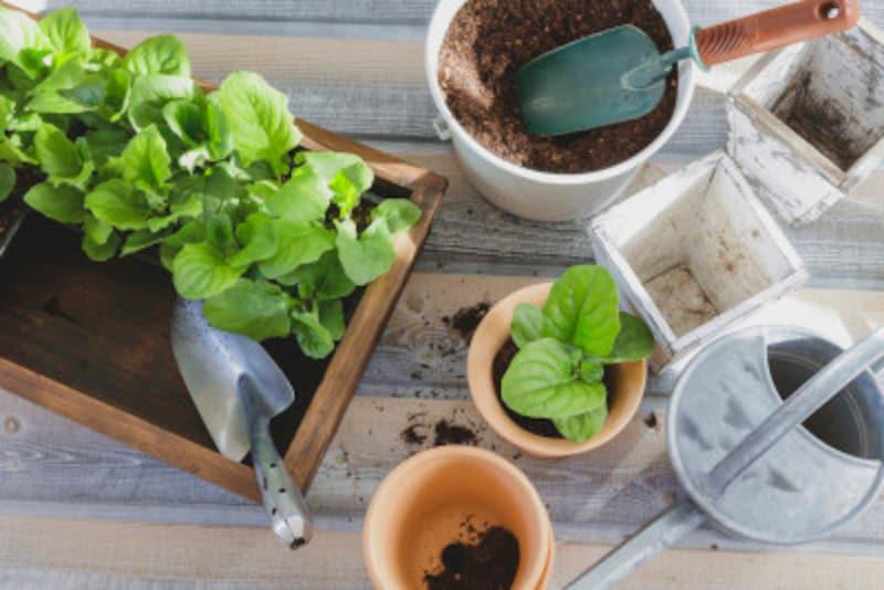 3月のガーデニング・花壇の作業
