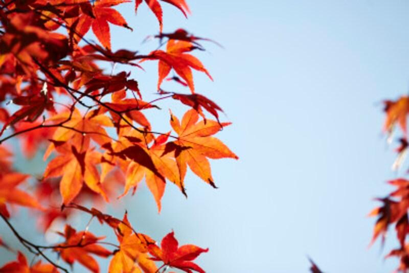 北の地では紅葉も終わり、落葉の季節となる