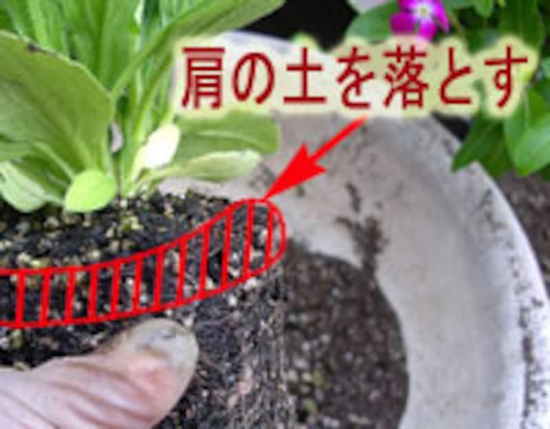 苗の肩の土を落とす