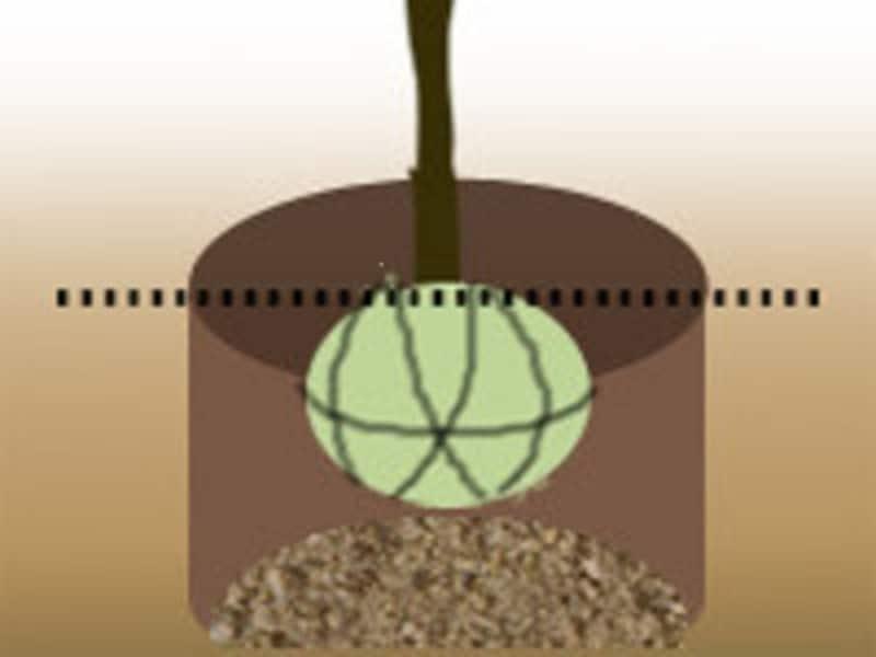埋め戻す土には、腐葉土や堆肥などをすき込んでおこう