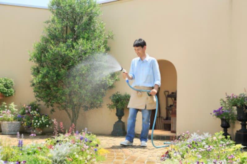 植物の「水やり」のポイント・コツ