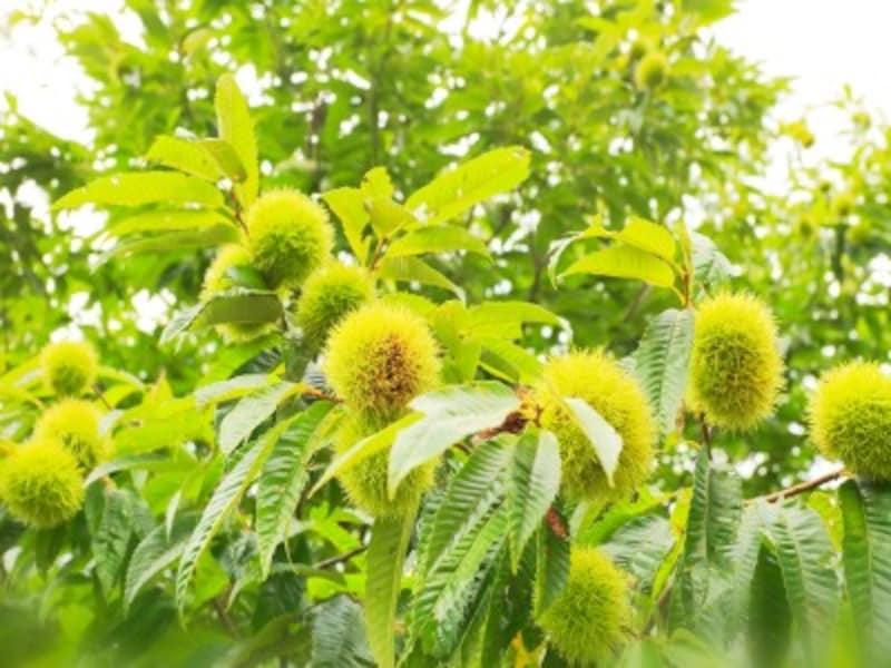 庭におすすめの果樹