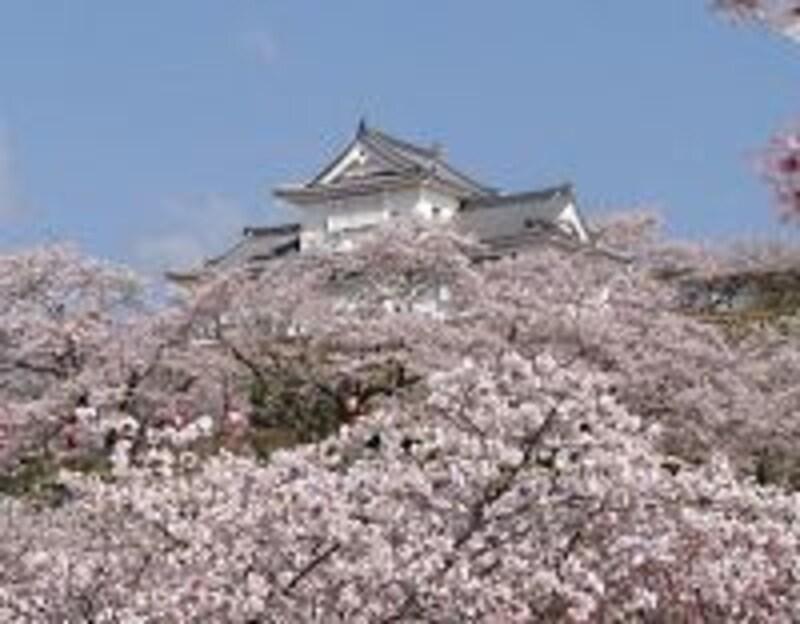 《津山》桜に包まれた津山城址・備中櫓/津山市観光協会提供