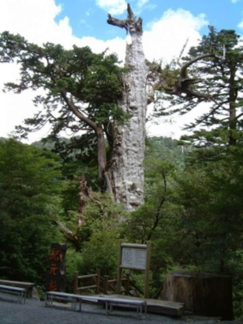 【鹿児島】屋久島・紀元杉