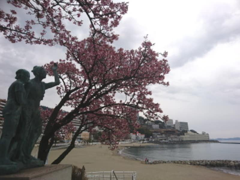 静岡/熱海・あたみ桜とサンビーチ