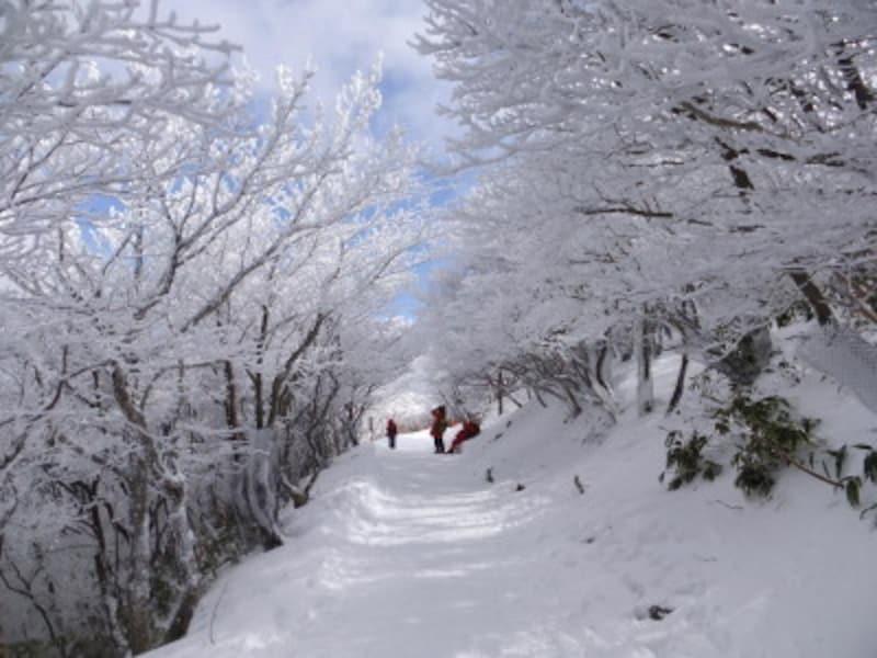 三重/御在所岳の樹氷
