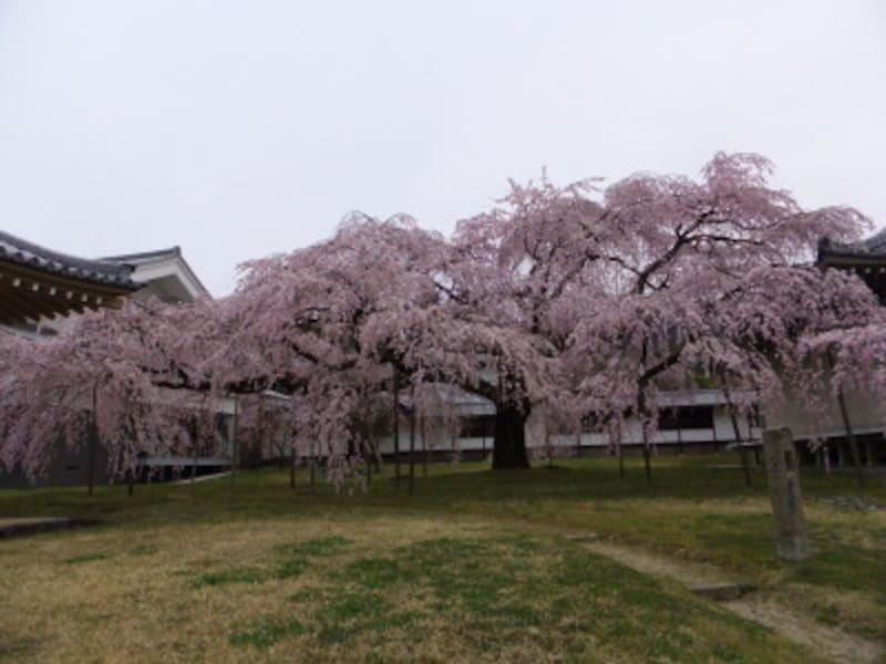 京都・醍醐寺