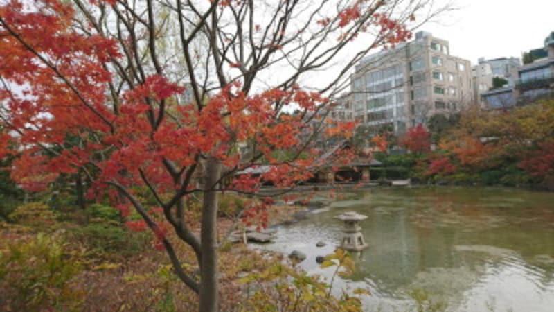 六本木・檜町公園の紅葉