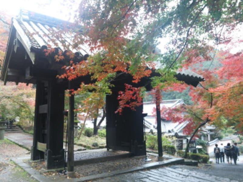 秋月城址の紅葉