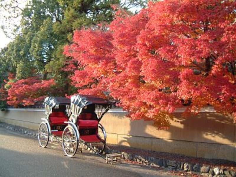 【京都】紅葉と人力車