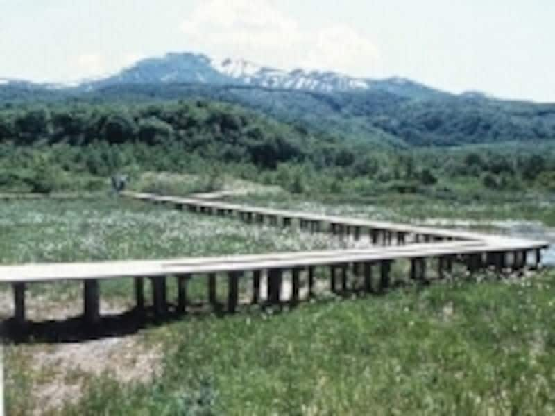 湿原には木の橋が。歩くだけでも楽しいものです