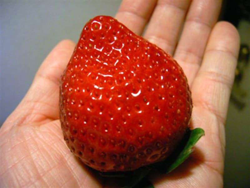 巨粒な苺、あまおう