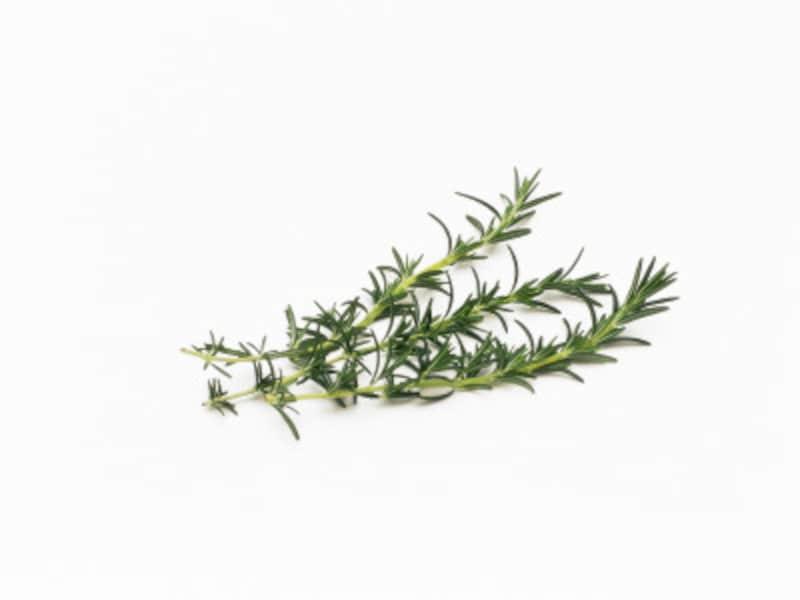 ローズマリーに代表されるリフレッシュアロマ。ほとんどがスッキリ系の香り