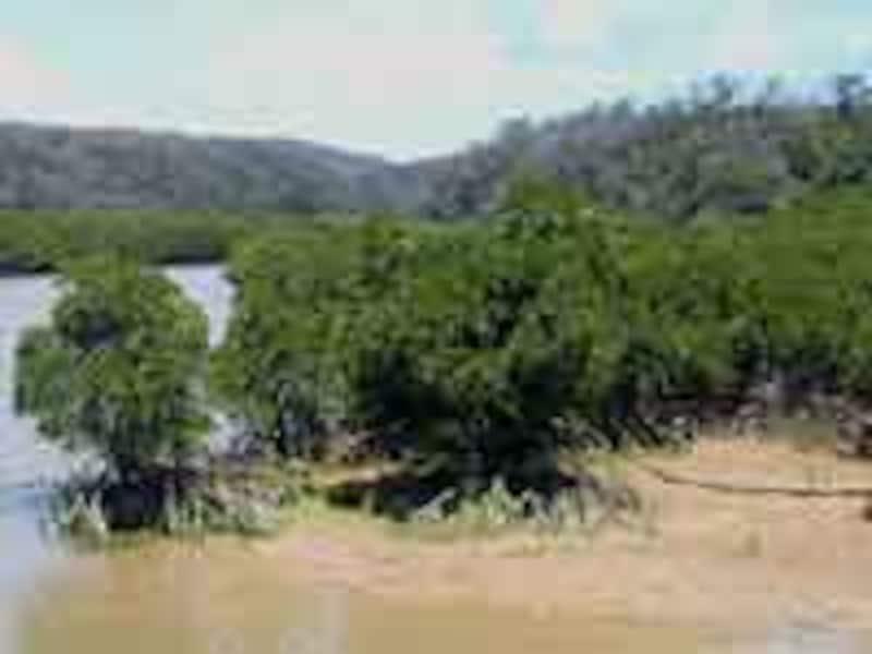 沖縄本島最大のマングローブ林