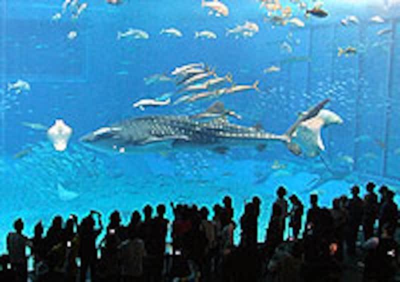 実ら海水族館