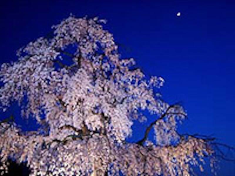円山公園ライトアップ