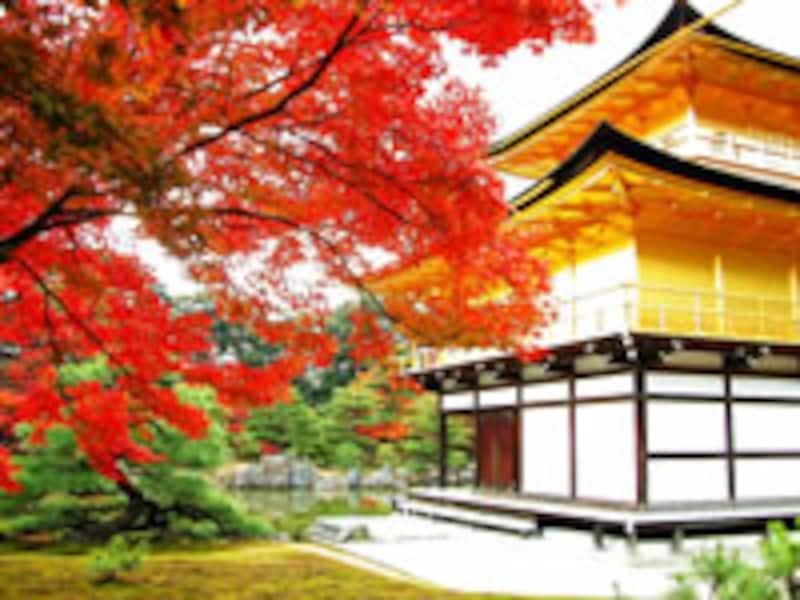 京都紅葉6選