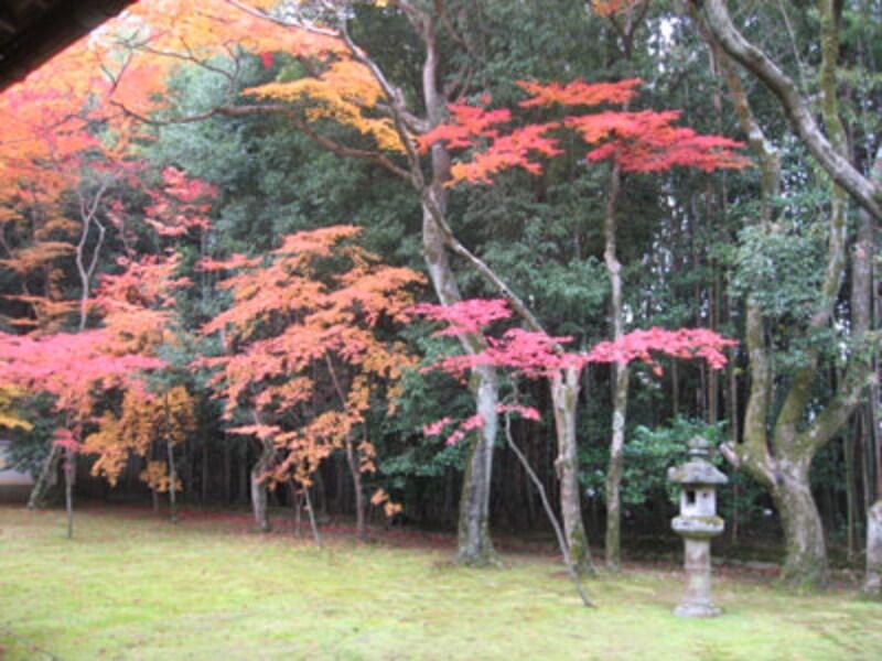秋は、お寺で紅葉とお抹茶を!洛西方面編