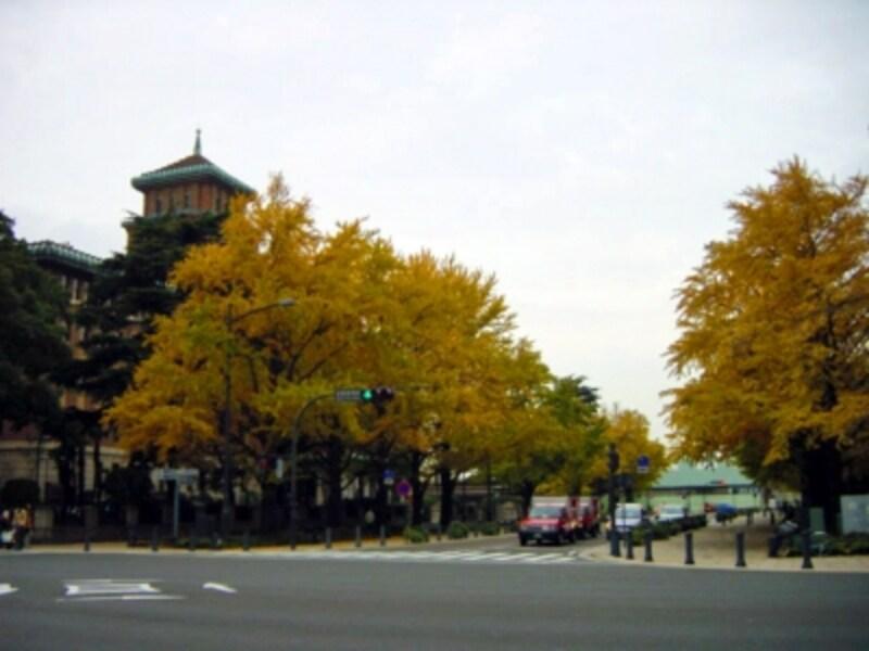 日本大通りのイチョウ並木。バックに見えるのは「キング」の愛称で知られる神奈川県庁本庁舎