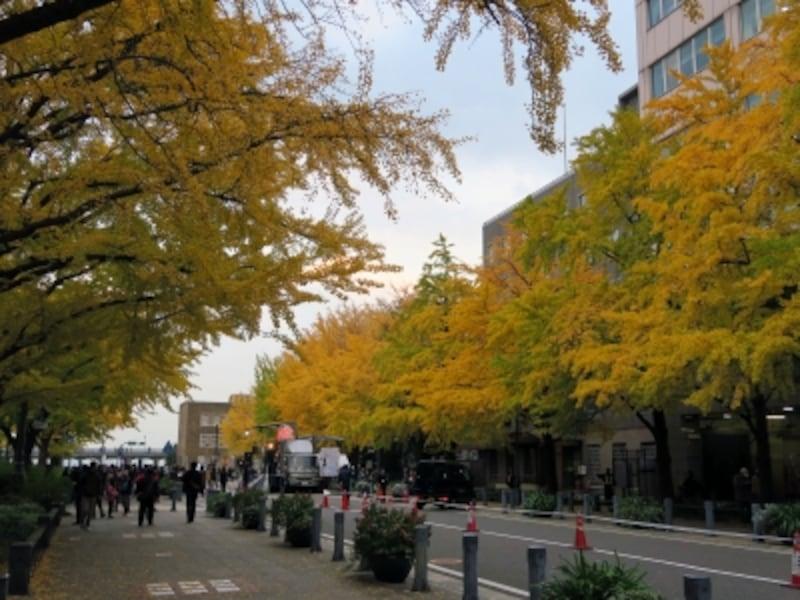 日本初の西洋式街路・日本大通り。重厚な歴史的建造物とともにイチョウ並木が楽しめます(2014年11月24日撮影)
