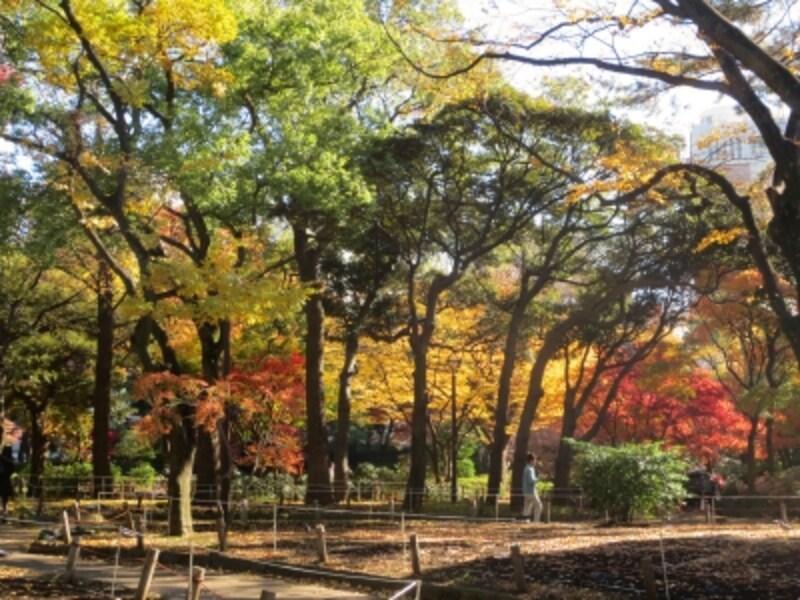横浜スタジアムがある横浜公園。春はチューリップが楽しめますが、秋は水の広場や日本庭園風の池の周辺などの木々が紅葉します(2012年12月16日)